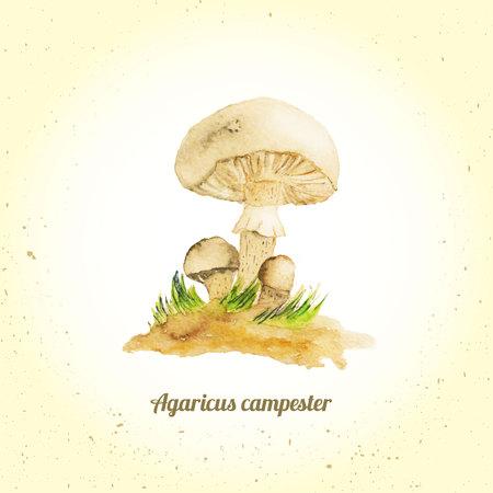 champignon: Vector watercolor mushroom champignon - agaricus on graund with grass.