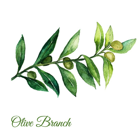 Vector watercolor hand drawn olive branch illusration with green leaves on white background.EPS10