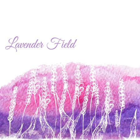 Vector lavender field on watercolor hand drawn background. EPS10