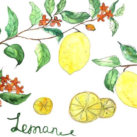Watercolor vector achtergrond verse citroen takken met bloemen en groene bladeren op een witte achtergrond. Illustratie voor banners, kaarten, stof Stock Illustratie