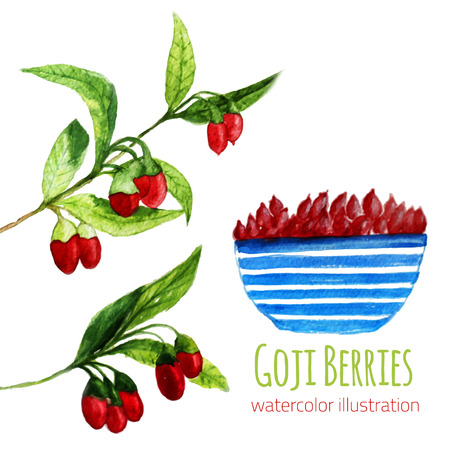 Watercolor illustration of fresh Goji (Wolfberries) Berries with leaves and branches on white background. For site background, poster, card design, banner