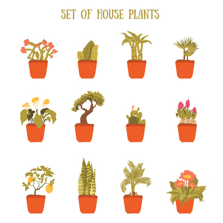 Plant in a pot vector set, decorative element for home decor. Isolated plant collection