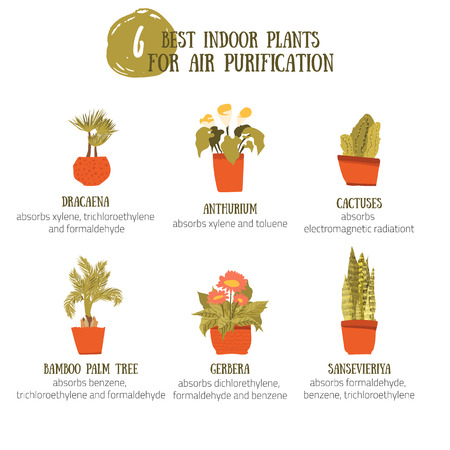 indoor garden: Indoor Plants for air purification. Vector collection in cartoon style with cactus, dracaena, palm tree, gerbera.