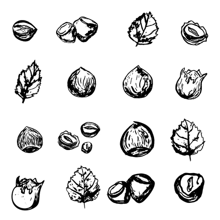 Hazel nut grunge set. Isolated hazelnuts healthy food. Natural walnut snack with leaves. Organic collection. Illustration