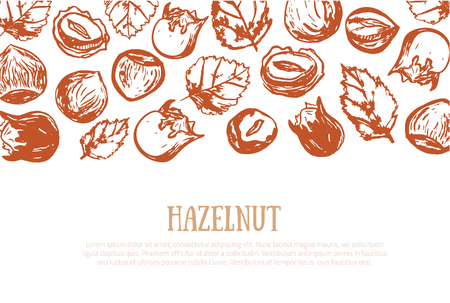Hazel nut grunge banner. Isolated hazelnuts healthy food site header. Natural walnut snack with leaves. Organic collection.