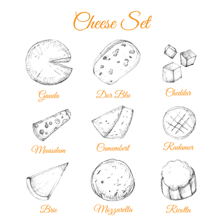 Sketch hand drawn cheese vector illustration set for poster identity, brand cuisine design with gauda, cheddar, riccota.