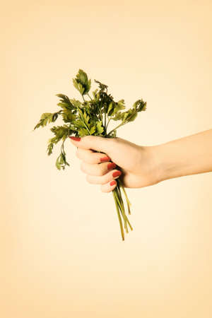 Parsley in hand. Green herb in the woman's hand. Stock Photo - 11882254