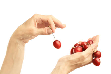 Hand cherry isolated handful  Two hands with cherries on white background Stock Photo - 12620805