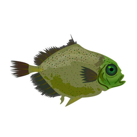 Sea green fish isolated on white. Oceanic fish.