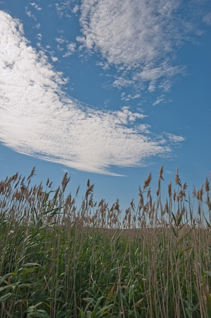 Field in the Rye  Blue sky with clouds  photo