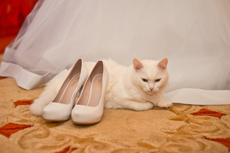 no heels: Dress of the bride and the white cat lying at feet. Stock Photo