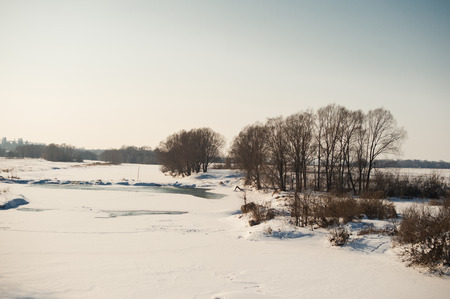 clear day in winter time: Field with planting of trees covered with snow. Stock Photo