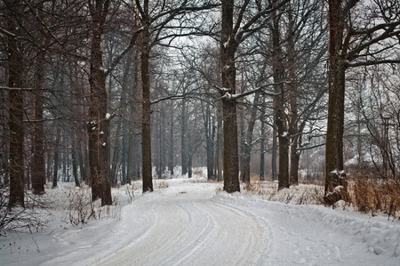 The winter road with traces from cars the leader through the wood. photo
