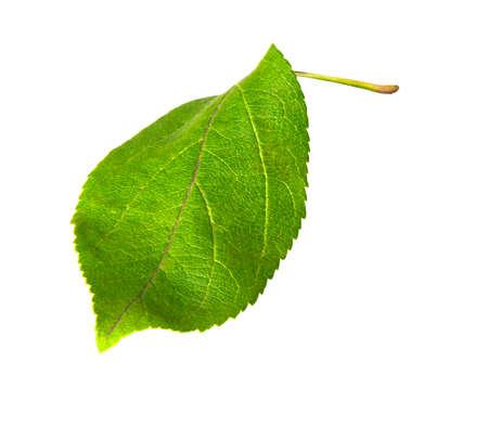 one sheet: One sheet of apple, close-up, isolated, white background
