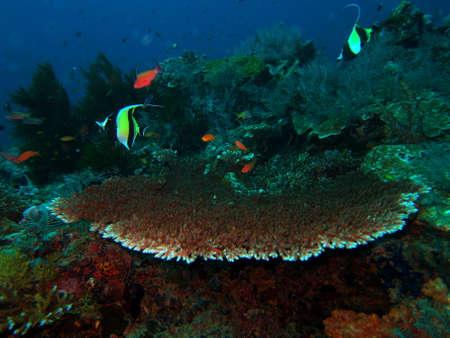 redang: Underwater landscape Stock Photo