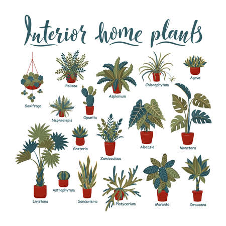 Big plants collection. Interior potted plants with plant names. Urban jungle, trendy home decor with plants. Succulents, cactus, fern, tropical leaves. Set of indoor plant vector. Cozy home