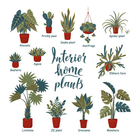 Big plants collection. Interior potted plants with plant names. Urban jungle, trendy home decor with plants. Succulents, cactus, fern, tropical leaves. Set of indoor plant vector. Cozy home Vektorgrafik