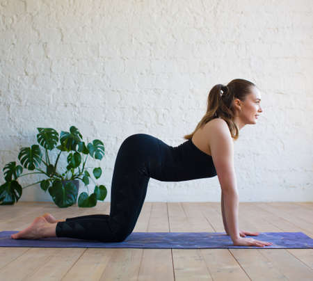 Young yogi woman practicing yoga, doing asana paired with Cat Pose on the exhale exercise, Cow, Bitilasana pose, working out, wearing black sportswear, indoor full length, gray wall in yoga studio
