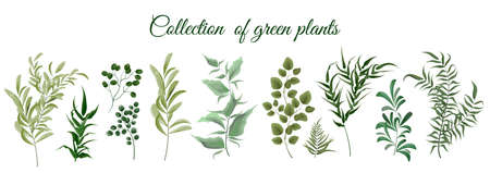 Collection of green plants. Elements for design. Vector plants. Illustration