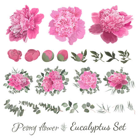 Vector collection of flowers and flora. Peony flowers, buds, leaves, eucalyptus, green plants, set of bouquets. All elements are isolated on a white background. Ilustracja