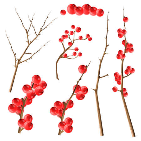 Vector collection of tree branches and cranberries. Set for Christmas design. All elements are isolated. Vettoriali