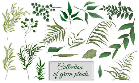 Collection of green plants. Elements for design. Vector plants. Çizim