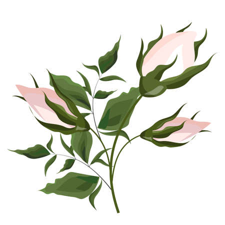 Vector illustration. Buds of pink roses with foliage. All elements are isolated.