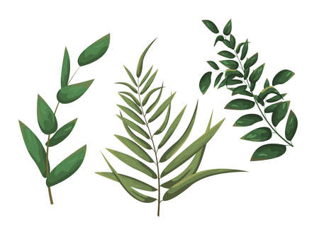 Elements for design. Vector branches. Vector illustration in watercolor style. Green leaves on the twigs. Ilustração