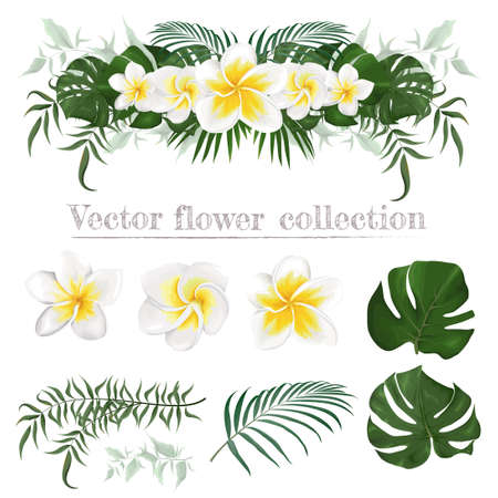 Vector border of frangipani flowers and plants. Compositions of plants. Plants isolated on a white background. Monstera, palm leaves, tropical plants. Elements for floral design. Ilustração