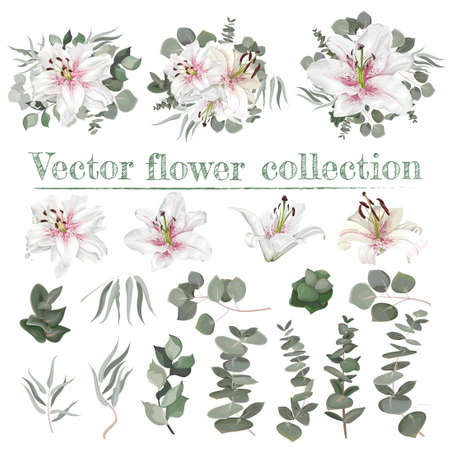 Vector flower set. White lilies with pink drops. Different plants and leaves, eucalyptus, berries. Each element separately on a white background.