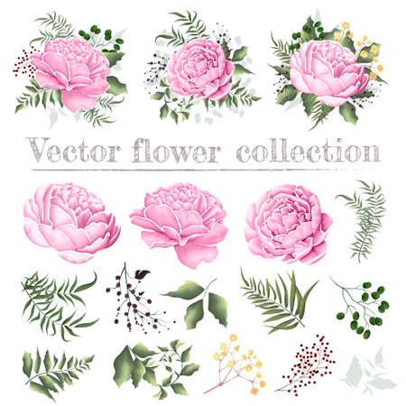 Set of vector floral compositions. Pink peonies, berries, gypsophila, green plants and leaves. Flowers and plants isolated on white background.