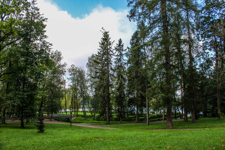 Summer park with bright nature trees with green leaves. Walk in the fresh air concept photo