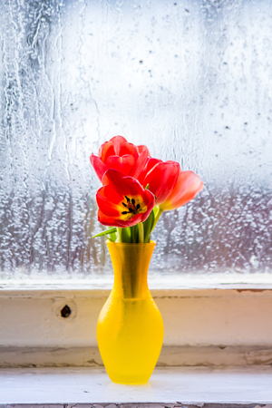 Red tulips in a vase. Postcard to the international womens day. March 8. Stock Photo