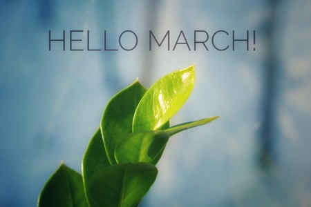 banner Hello March.Greeting card. The beginning of the new season. Spring came Stock Photo
