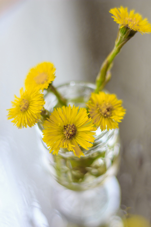 flowers in a glass. yellow flower