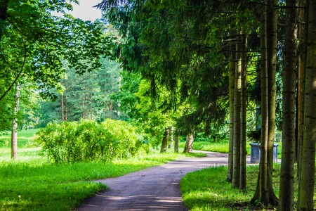 Summer paths of the park. Green alleys. Grass, foliage, trees. Bright park. Summer Park Background Imagens