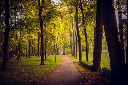 Ochtend herfst park. Foto herfst park. Parkeer bij zonsopgang in de herfst. Zonnige ochtend. Begin van de herfst. September Net begonnen bladeren te vallen in het park