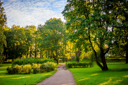 Morning autumn park. Picture autumn park. Park at sunrise in the fall. Sunny morning. Beginning of autumn. September Just started to fall leaves in the park