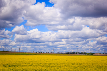 Summer landscape in the field. Field of yellow flowers and blue sky with clouds. Summer field background Standard-Bild