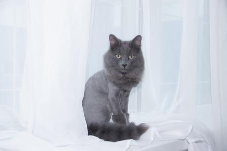 Gray domestic cat on the windowsill. Imagens