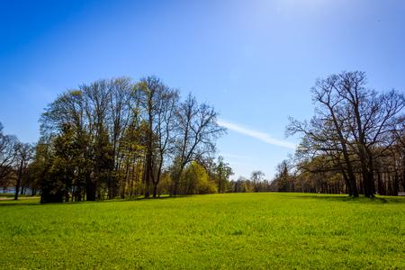 Park Wiosny. Park w maju. Park wiosną w słoneczną pogodę. Zdjęcie Seryjne