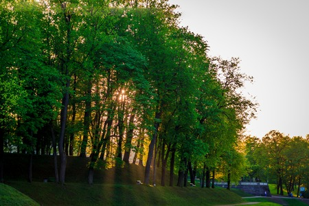Spring evening park. Park at sunset. Evening sun Russian park. Park in the green. Urban Park. evening in the park