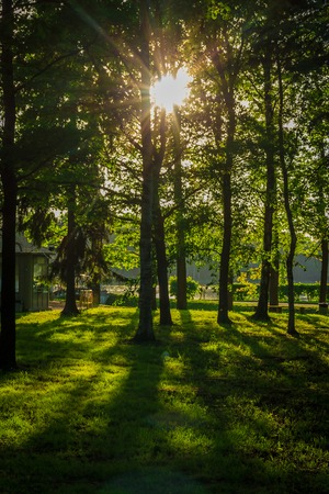 Frühlingsabendpark. Stadtpark. Russischer grüner Park. Stille im Stadtpark.