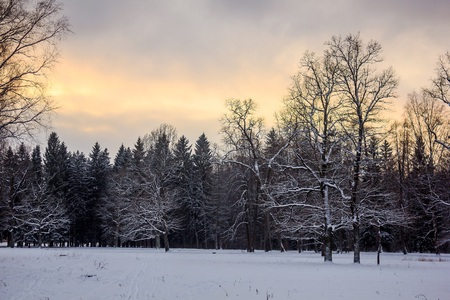 Winter Park. Snow park. Picture winter park. Winter landscape. Winter nature Stok Fotoğraf