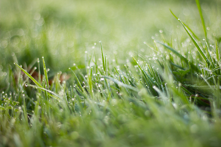Dew drops on the grass. Morning grass Nature. Green young grass