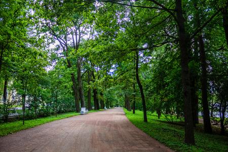 Gassengrün im Park. Hintergrund Sommerpark. Russischer gepflegter Park. Schöne Gassen des Parks