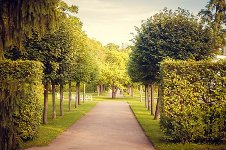 Alley green in the park. Background summer park. Russian well-groomed park. Beautiful alleys of the park