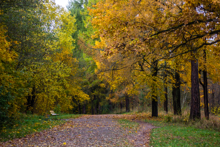 Autumn park in cloudy weather. overcast weather. autumn. sad picture. sadly sad time