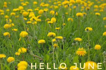Banner hello june. Text on the photo. Text hello June. New month. New season. Summer month. Text on a photo of flowers. Flowers and plants. Nature