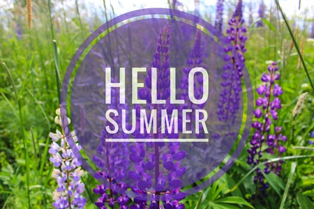 Hello summer banner. Text on the photo. Text hello summer. New month. New season. Summer. Text on a photo of flowers. Summer flowers. Nature